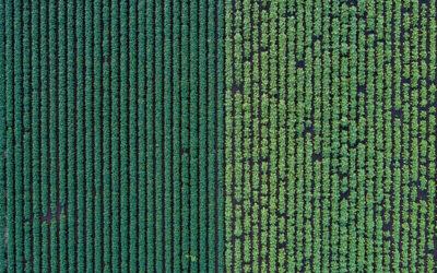 Frumento, una prova di coltivazione Biologica