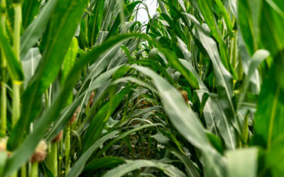 La sperimentazione in campo prima risposta all'agricoltore e cardine delle nostre scelte