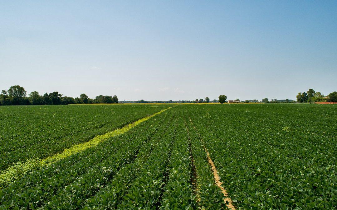 Incontro Agricola Grains a Rovigo
