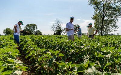Focus sul mercato e analisi della redditività della soia