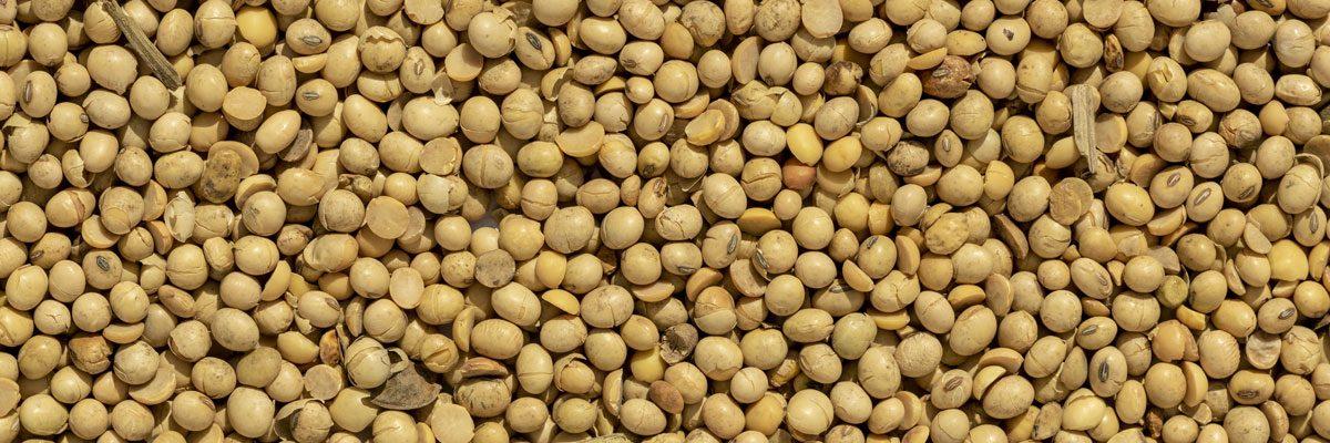 soia-tostata-biologica